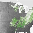 Net carbon uptake has increased through warming-induced changes in forest phenology