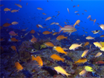MERT Partners with Pacific Islands National Marine Sanctuaries to Identify Climate Science Needs