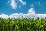 Plant Physiology Plays Major Role in Ozone Uptake
