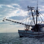 MAPP Webinar Series: Seasonal Predictions of Fisheries