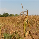 New NOAA product improves early warning of drought